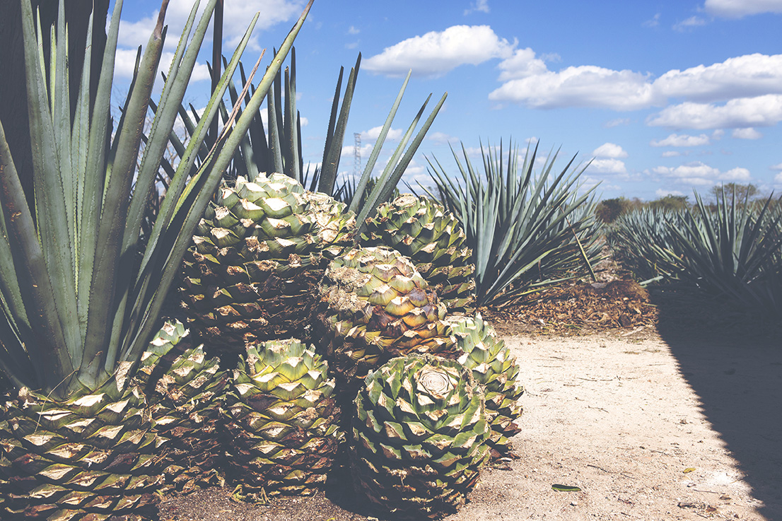 Tequila – unsere fünf beliebtesten Kreationen