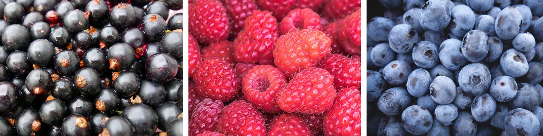Fruchtlikor